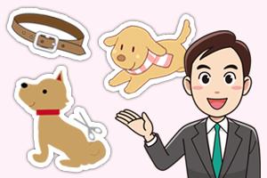 ペット業界向けのマグネット広告戦略について